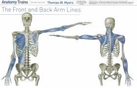 arm lines